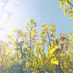 Nowa strona pons.pl rozkwita na wiosnę